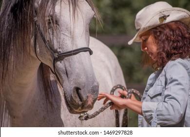 Equine expert handling white horse.