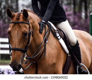 Equine photography during a horse show creative content