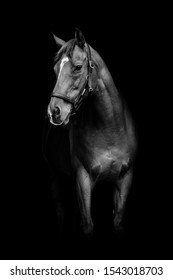Equine Portrait created on a farm yard