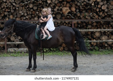 Equine therapy, recreation concept. Children sit in rider saddle on animal back. Sport, activity, entertainment. Friend, companion, friendship. Girls ride on horse on summer day. riding school