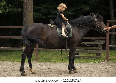 Equine therapy, recreation concept. Girl ride on horse on summer day. Child sit in rider saddle on animal back. Friend, companion, friendship. Equine therapy, recreation concept. Sport, activity