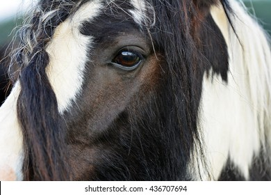 Equine view