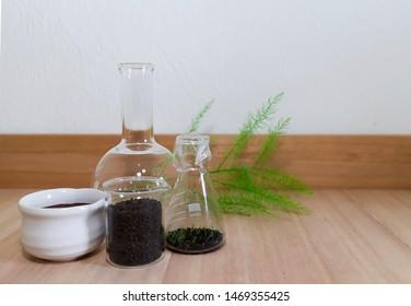 Imágenes, fotos de stock y vectores sobre Plant Growing in