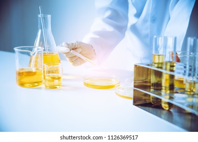 Equipment and science experiments oil pouring scientist with test tube yellow making research in laboratory.