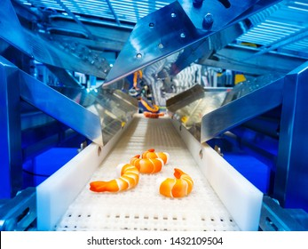 Equipment for seafood processing. The technology of quick freezing shrimp. Conveyor for processing sea products. Shrimp conveyor. Production of frozen semi-finished products. Food industry.