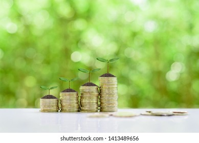 Equity / Stock investment for dividend and capital gain, financial concept : Small tree or sprout grow on rows of rising / increasing coins, depicts investor invests money in a long-term growth stock