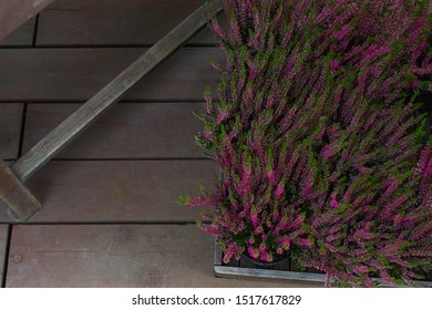 Erica Heather in a box on a background of wooden boards