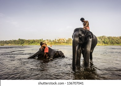 ERNAKULUM, INDIA - JANUARY 11, 2011: Mahouts, trainers, bathe their elephants in the Periyar river as part of their training and hygiene routine on January 11, 2011 near Ernakulum, Kerala, India.
