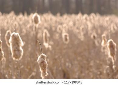 Erntezeit Gräser Natur Farmland auf dem Lande