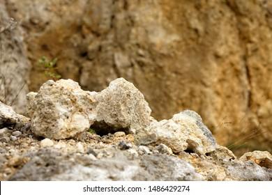 Eroded limestone rocks in the rock outcrop in the Świetokrzyskie Mountains in Poland.
