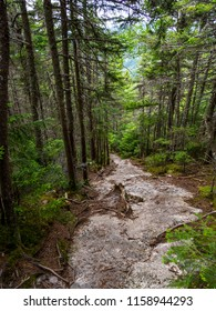 Eroded trail, bare rock footpath through dense woods, part of the Appalachian Trail in Maine.
