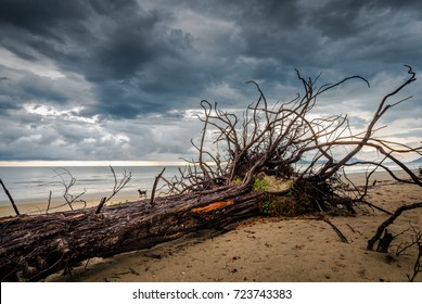 Erosion of the coast, Dead trees and storm clouds at the beach in Thailand, global warming, climate change effect