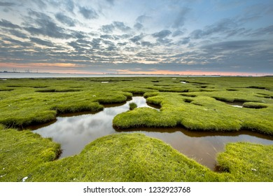 Erosion holes in the tidal marsh meadow of Dollard at the Punt van Reide in the Waddensea area on the Groningen coast in the Netherlands