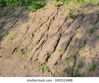 Erosion on a small slope where growths are far from enough to prevent erosion.