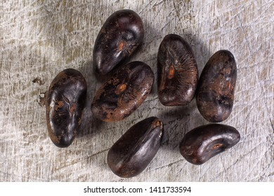 erythrina tree edible seed closeup