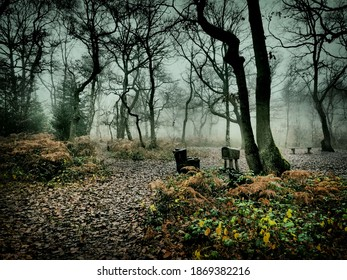 escape in deep forest fog