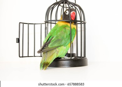 the escape. Parrot in a cage with an open door on a white background. Photo for your design