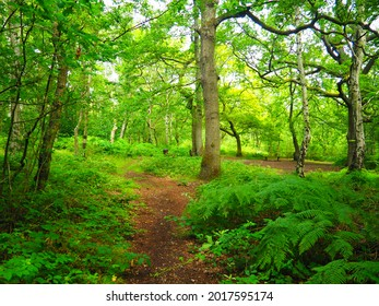 escape in wooden Green land