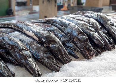 Espada Preta fish of Madeira on crushed ice at the Funchal fish market. Black scabbardfish, Aphanopus carbo, is a bathypelagic cutlassfish of the family Trichiuridae