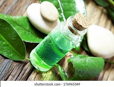 Essential Oil Bottle.Tea Tree Essence for Aromatherapy