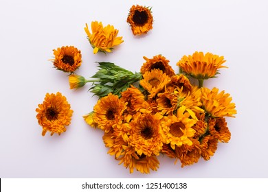 essential oil of calendula on a white background