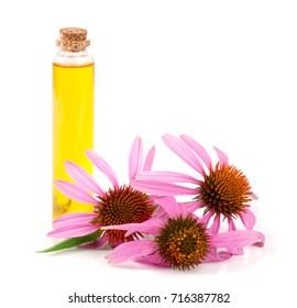 Essential oil of Echinacea purpurea isolated on white background