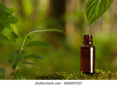 Essential oil falling from green leaf. Organic bio alternative medicine, brown bottle.