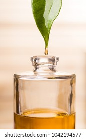 essential oil flows from a jasmine leaf and drips into a small bottle in the foreground