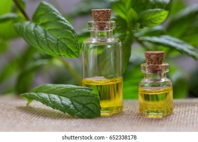 Essential oil made from mint