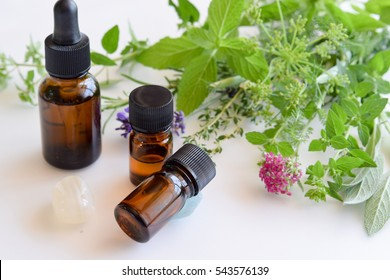 essential oils with fresh herbs in white background