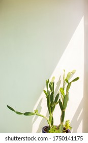 Estern prickly pear (Opuntia humifusa) Cactus with bright sunshine.