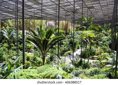 Estufa Fria covered garden in Lisbon, Portugal