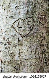 etched signs on the bark of a tree