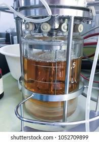 Ethanol fermentation using yeast in laboratory fermentor or fermenter