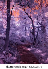 Ethereal path. Tokyo, Japan. Taken with a specially modified camera that captures an extended infrared range. All light seen here is invisible to the naked eye.
