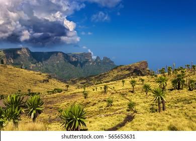 Ethiopia. Simien Mountains National Park. Giant Lobelia in the foreground, Imet Gogo peak in the background
