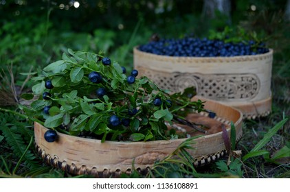 An ethnic hand-made pannier with blackberry branches and berries at harvest time. Holidays. 22 July - the blackberry harvest day (Cyril and Pancratius day in Orthodox church).