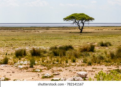 Etosha-Phanne mit Baum im Etosha Nationalpark, Namibia, Ethosha Pan with Tree, in Ethosha National Park, Namibia