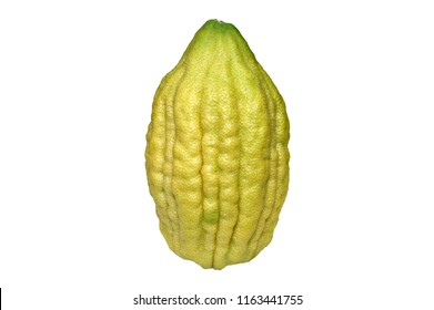 Etrog, four species Sukkot Jewish holiday white background