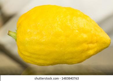 Etrog (Lemon or Citron)Traditional symbol (One of The four species -  arba'at ha-minim) - Image. Jewish holiday of sukkot festival