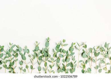 Eucalyptus branch on white background. Flat lay, top view minimal concept. Blog hero header. Eucalyptus background.