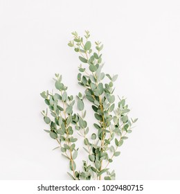Eucalyptus branch on white. Minimal flower background. Flat lay, top view.