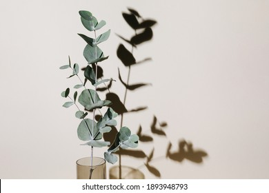 Eucalyptus branch in vase on pastel neutral beige background with sun light and trendy shadow. Modern interior design concept