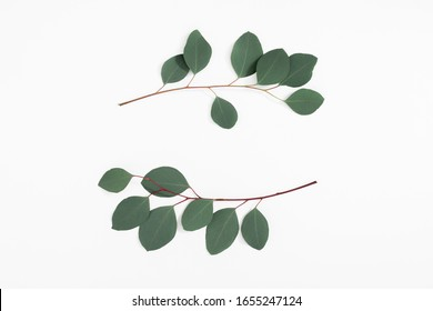 Eucalyptus branches and leaves on white background. Minimal composition of eucalyptus. Flat lay, top view, copy space