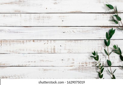Eucalyptus branches and leaves on wooden rustic white background. Minimal background eucalyptus on white board. Flat lay, top view, copy space