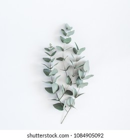 Eucalyptus branches on pastel gray background. Flat lay, top view, square