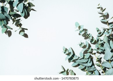 Eucalyptus branches on pastel green background. Flat lay, top view.