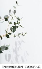 Eucalyptus branches on a white watercolor textured background with shadow. Selective focus