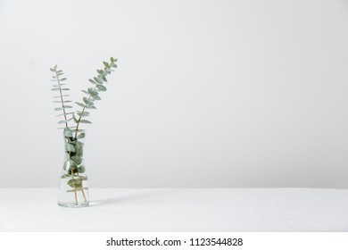 Eucalyptus branches in small glass vase against white/neutral background