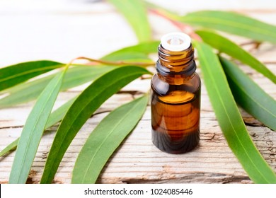 Eucalyptus essential oil and fresh leaves on the wooden board